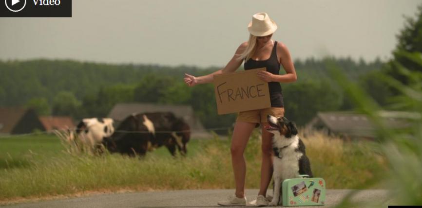 Călătoria cu animalele de companie: reguli de ținut minte
