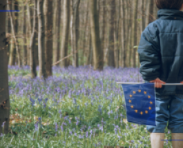 România: proceduri de infringement în domeniul mediului privind exploatarea forestieră ilegală, calitatea aerului și protejarea rețelelor Natura 2000