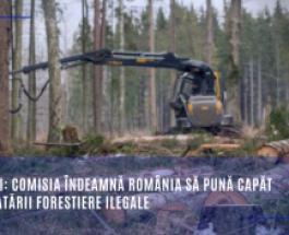 Păduri: Comisia îndeamnă România să pună capăt exploatării forestiere ilegale